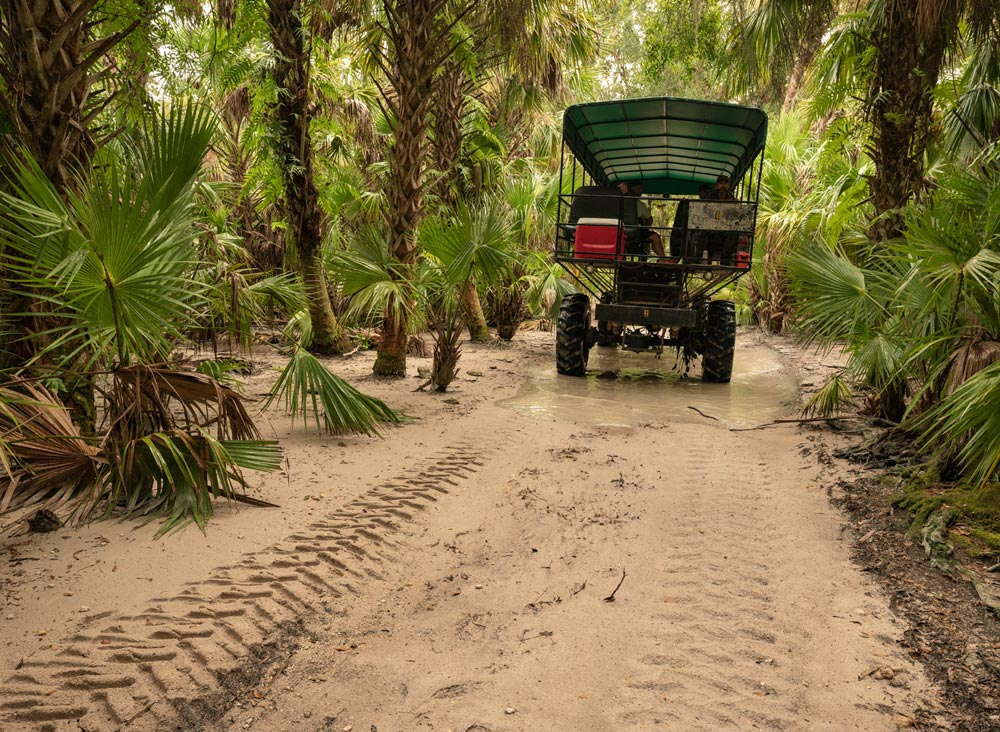 Florida Everglades Swamp Buggy Tour