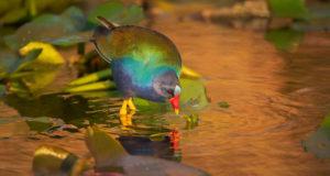 Florida Seminole Tourism - Request Information
